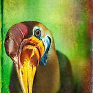 Red knobbed hornbill in lust by alan shapiro