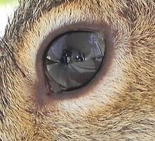 Do You See What I See?  by Melissa Carlini