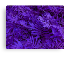 Purple Ferns - HSL Beauty Canvas Print