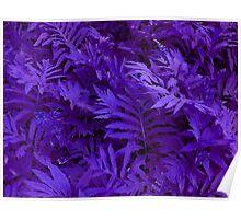 Purple Ferns - HSL Beauty Poster