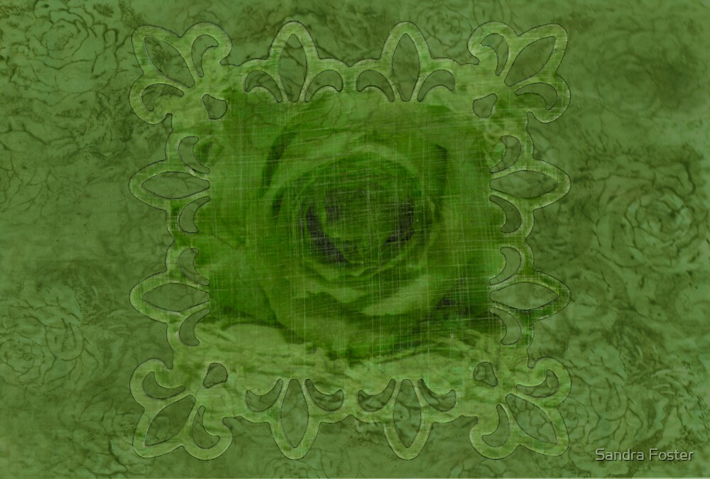 Lime Rose by Sandra Foster