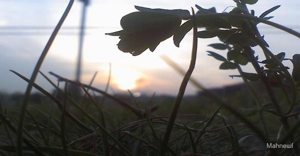 Micro Shot by Mahnewl