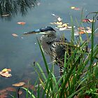 Blue Heron At Glover Cleveland Park by Jane Neill-Hancock