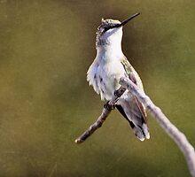 Hummingbird by TraceyTilsonArt