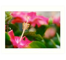 Hibiscus Blossoms Art Print