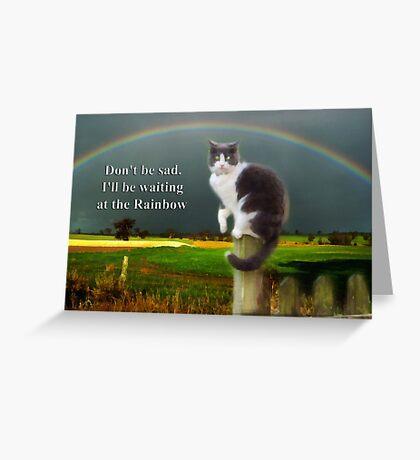 Cat Sympathy Card Greeting Card