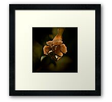 Bumble & Flower Framed Print