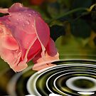 Rose above water by loiteke