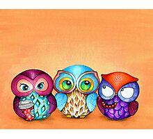 Autumn Owl Trio Photographic Print