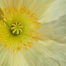 Lemon sorbet by Celeste Mookherjee