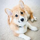 : My Corgi! : by Only K Photography