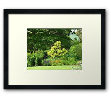 A Gap in a World of Green Framed Print