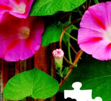Puzzled Morning Glories dedicated to summer memories Sticker