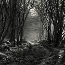 The Woods In Winter by EvilTwin