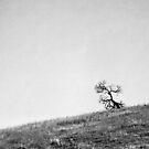 Solitude by BreeDanielle