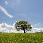 Lonely Oak in the Black Mountains by Mark Zytynski