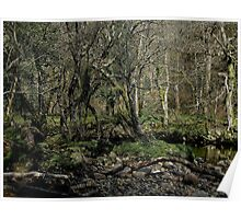 Dartmoor River Dart Holne Chase In March Poster
