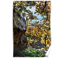 Fall Color At Robber's Cave Poster