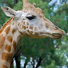 Giraffe Profile by Penny Smith