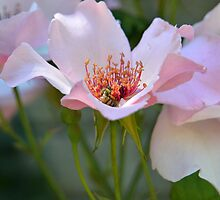 Pink Lunch by Walter Cahn