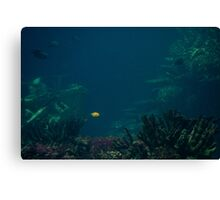 A Spot in the Ocean Canvas Print