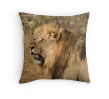 Lion walking in game reserve Throw Pillow