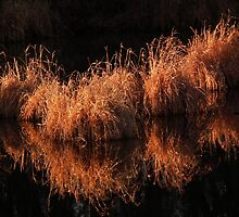 Reflections of Golden Grasses by Deb Fedeler