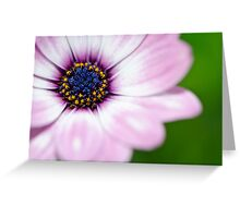 Shallow Depth Of Field #4 Greeting Card