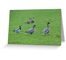Two Pinkfeet & A Barnacle Greeting Card