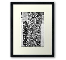 Elk Gnawed Horning Aspen Trees BW Fine Art Print Framed Print