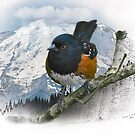 Rufous-sided Towhee by Bryan Peterson