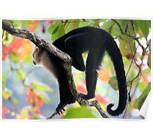 jungle colour Poster