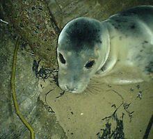 Seal we rescued in North Shields by Jackie Wilson