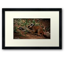 Watching over me Framed Print
