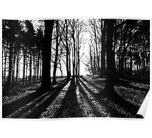Sillouhette Trees..... Poster