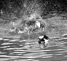 Splash Down Duck by Walter Cahn