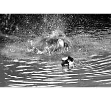 Splash Down Duck Photographic Print