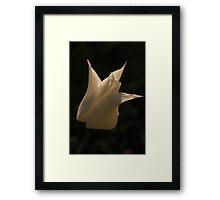White tulip II Framed Print