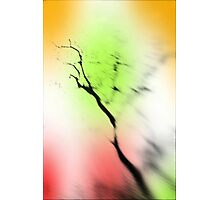 the outer edge Photographic Print