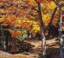 Fabulous fall by Jamie Lee