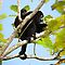 In a Tree - (Land Mammals Category)