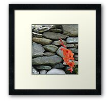 Stone Wall With Gladioli Framed Print