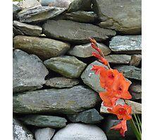 Stone Wall With Gladioli Photographic Print