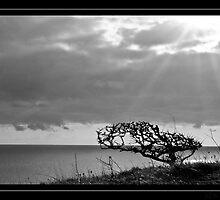 Lone tree B&W by Ben  Warren