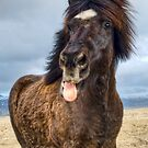 Icelandic horse showing his respect by Michael Stiso