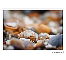 Shell amongst stones Photographic Print