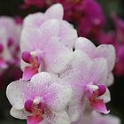 Awesome Orchids by Astrid Ewing Photography
