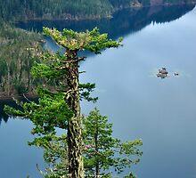 Tree above Diablo by Robin Nellist
