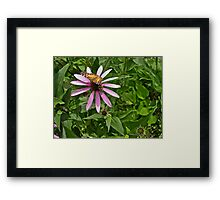 Butterfly and Bumble Bee Framed Print