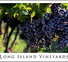 Long Island Vineyard Poster by Joanne Henig Photography